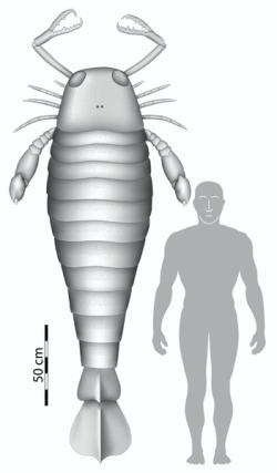 Teoria da Origem Superior das Espécies Jaekelopterus+rhenaniae+roughly+2.5+metres+long+-+Braddy+et+al.+Biology+Letters