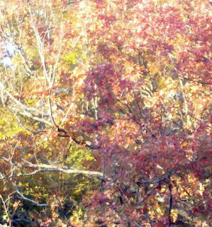 Autumn, Fall leaves, pics of fall colors, Ouchita Mountains, Talimena Drive