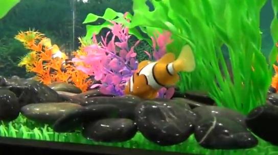Fish forex robot