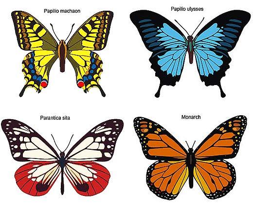 butterfly species butterfly species butterfly speciesButterfly Species Names