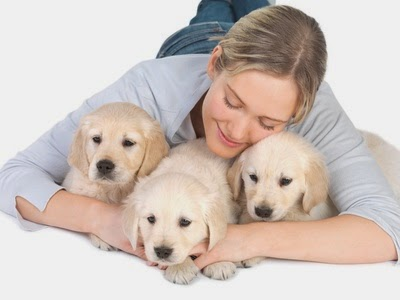 Como cuidar bem de animais de estimação