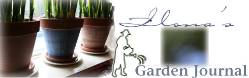 A Garden Journal Diary of Ilona's Garden