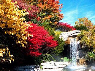 flores rojas, naranjas sobre cascada