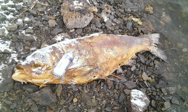 на рефтинской утонули рыбаки