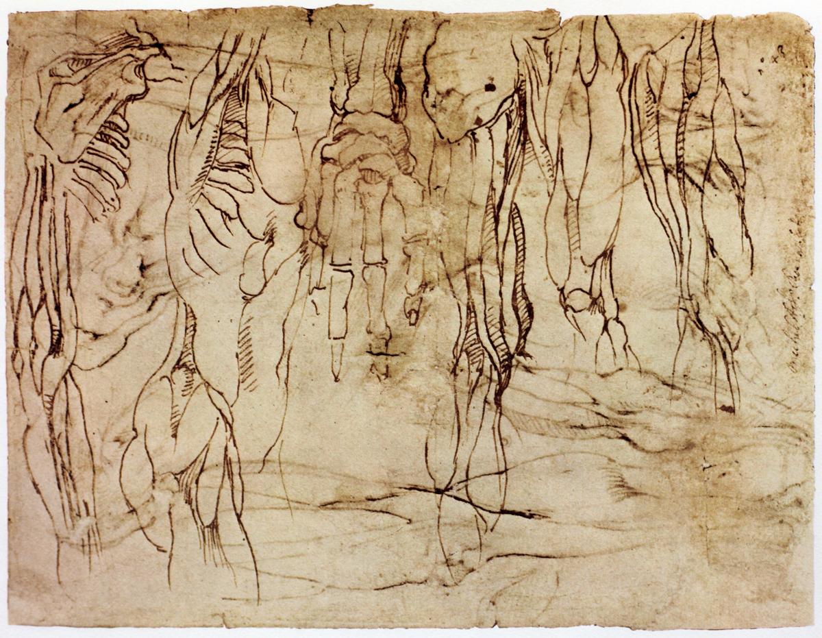 The Classical Pulse: Michelangelo: Anatomy Studies