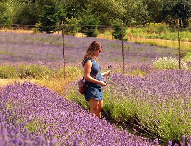 Lavender Festival at Pelindaba Lavender Farm 2014