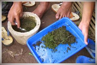 Cara Membuat Pestisida Organik Sendiri Di Rumah
