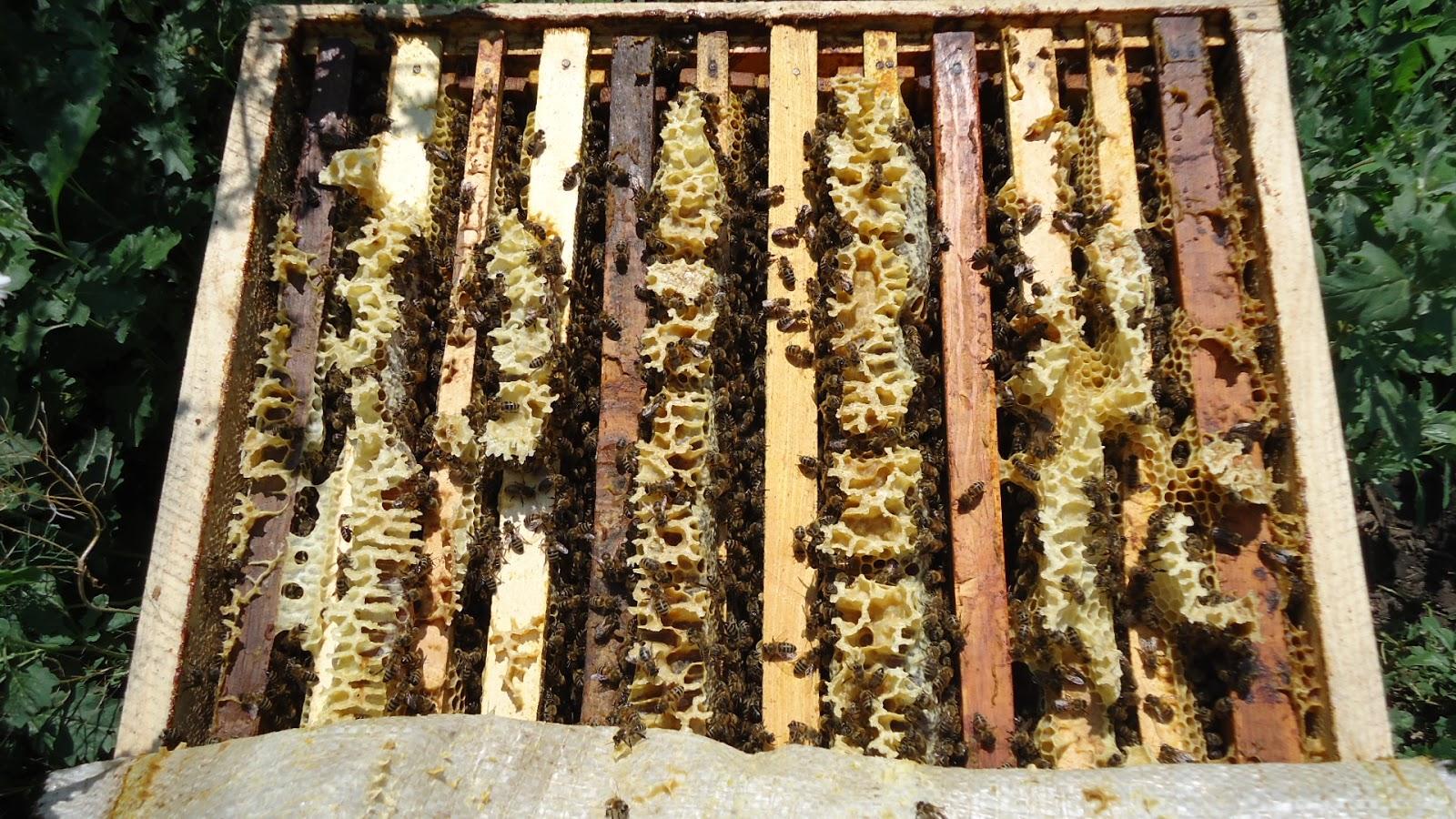 Как сделать отводок пчелы