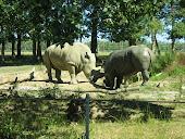 Safari de Peaugres 07000