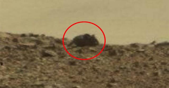 Astronom Temukan 'Tikus' di Planet Mars?