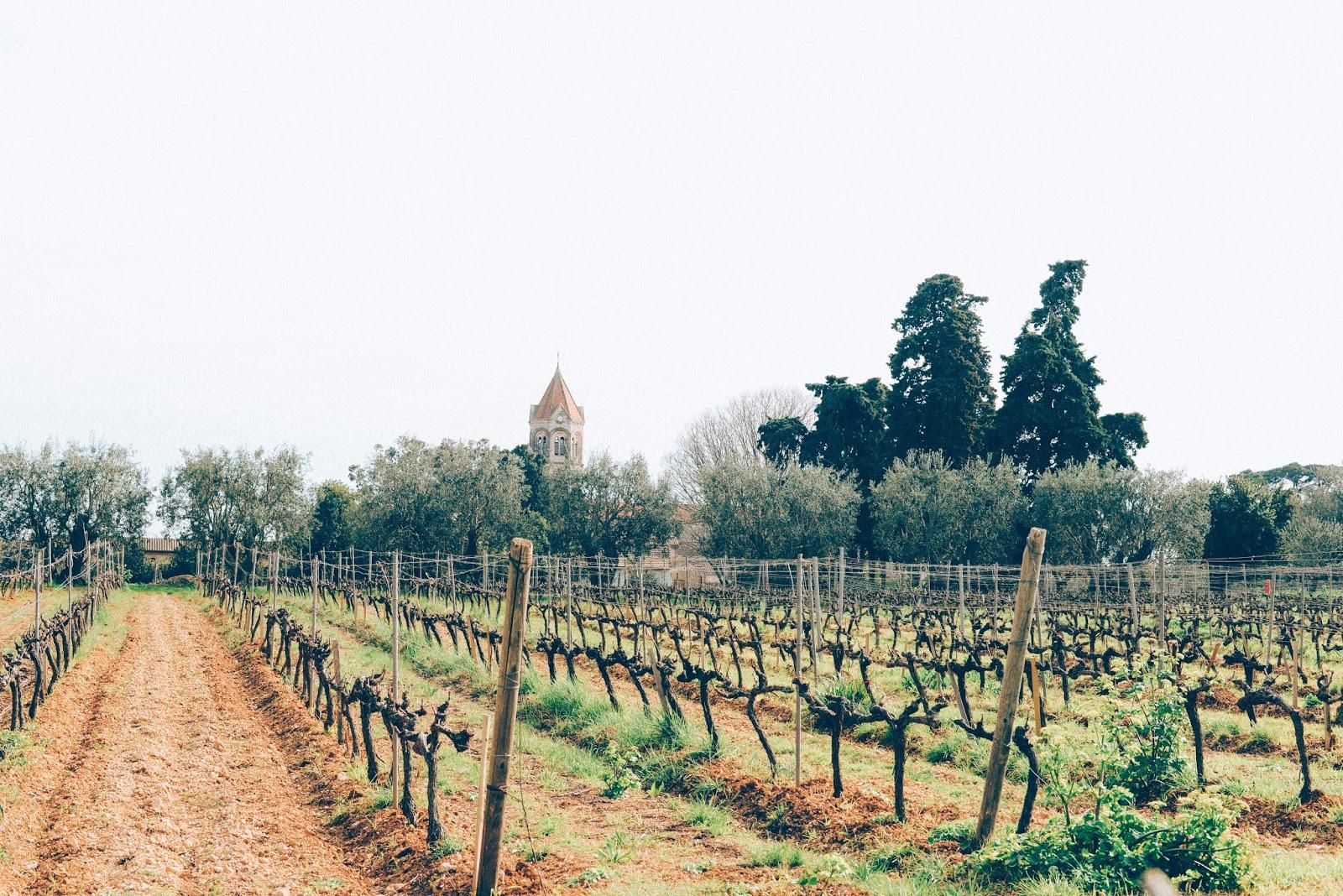 Vignoble abbaye Saint-Honorat