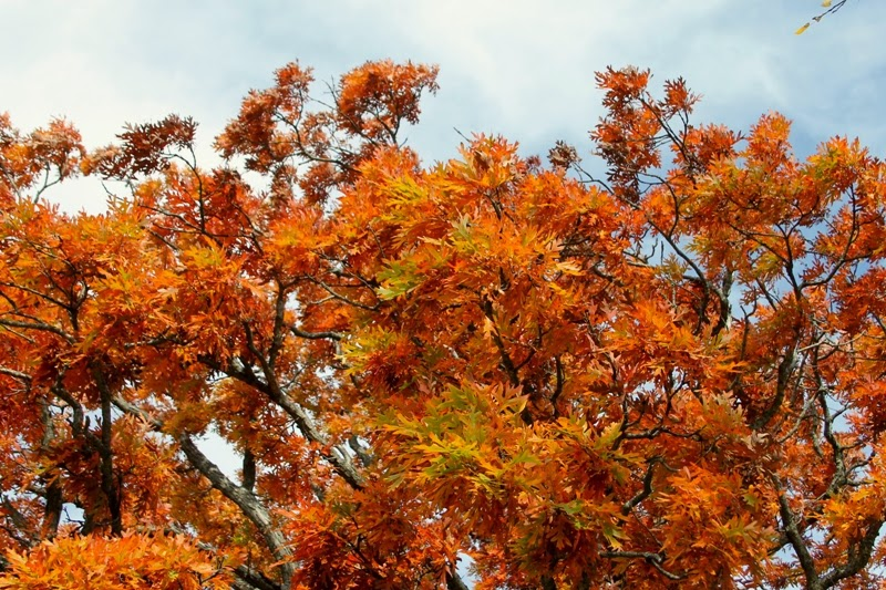 fall colors at Grandad Bluff Park, La Crosse, WI
