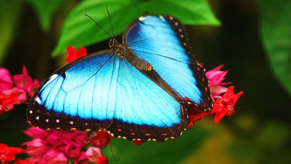 Download Butterfly HD Pics for Mobile
