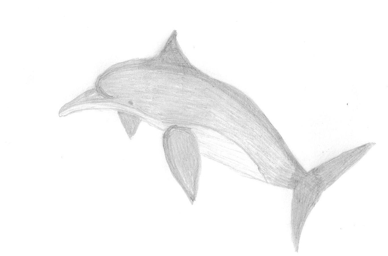 Dolphin Draw