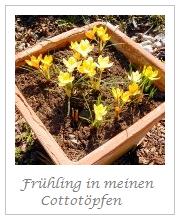 Frühling in den Cottotöpfen