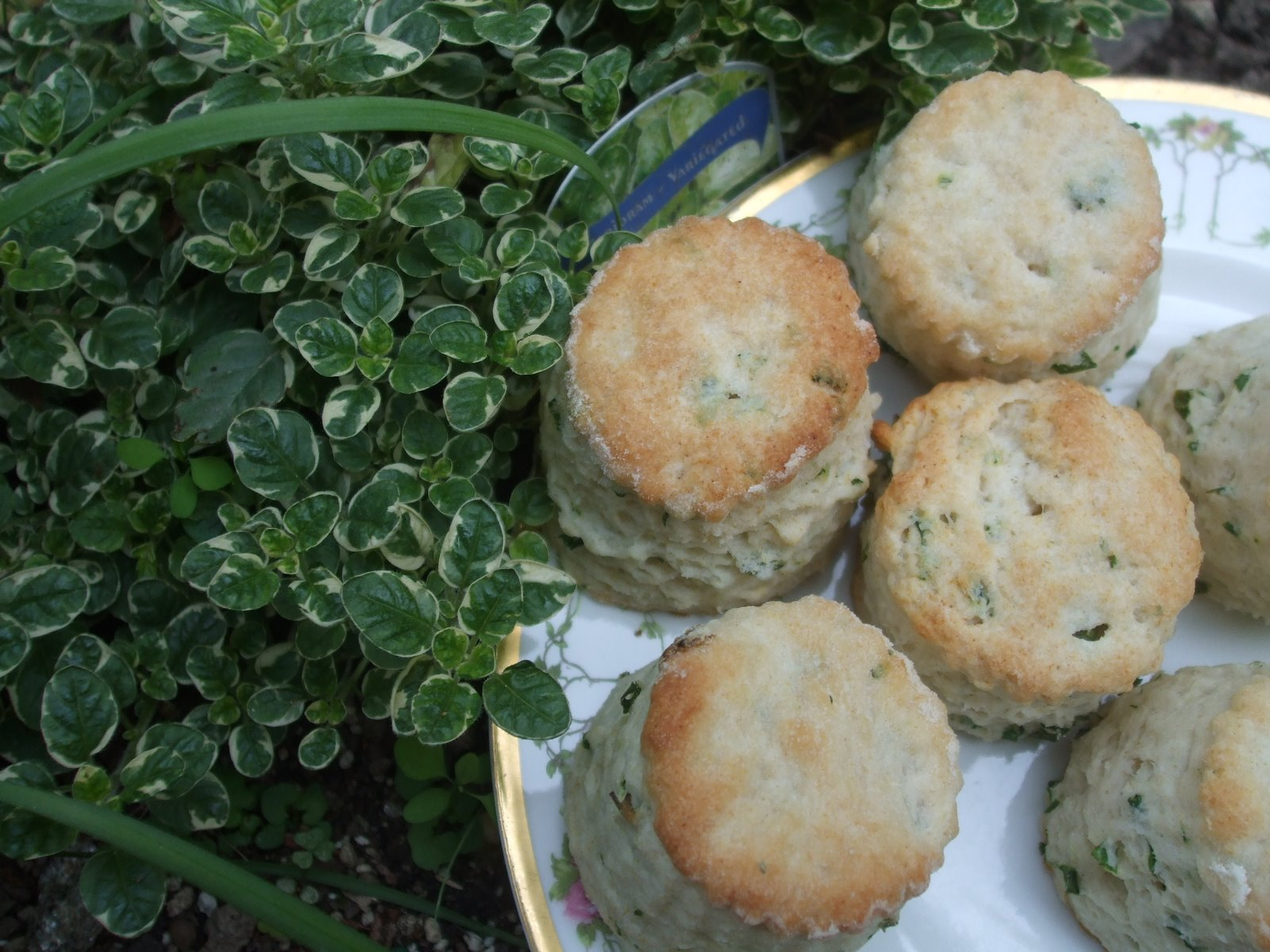 Rosemary's Sampler: Garden Fresh Herb Biscuits