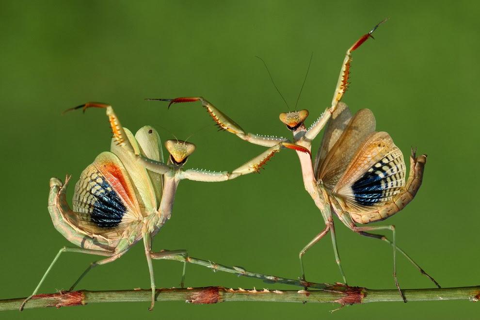 Insectos palos