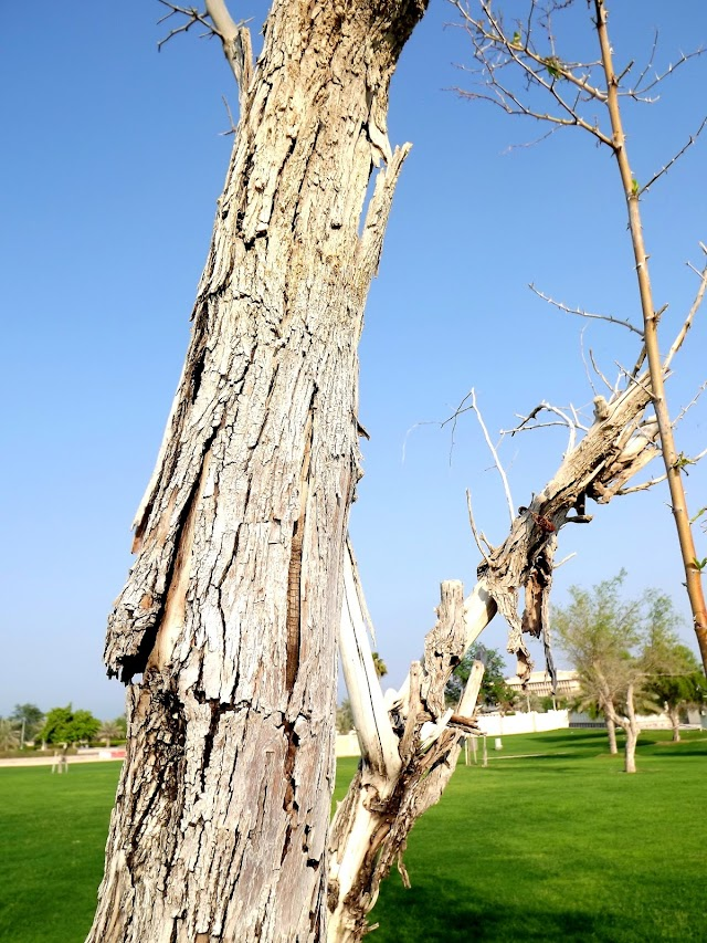 Al Corniche Park Tree Closed Photo shoot