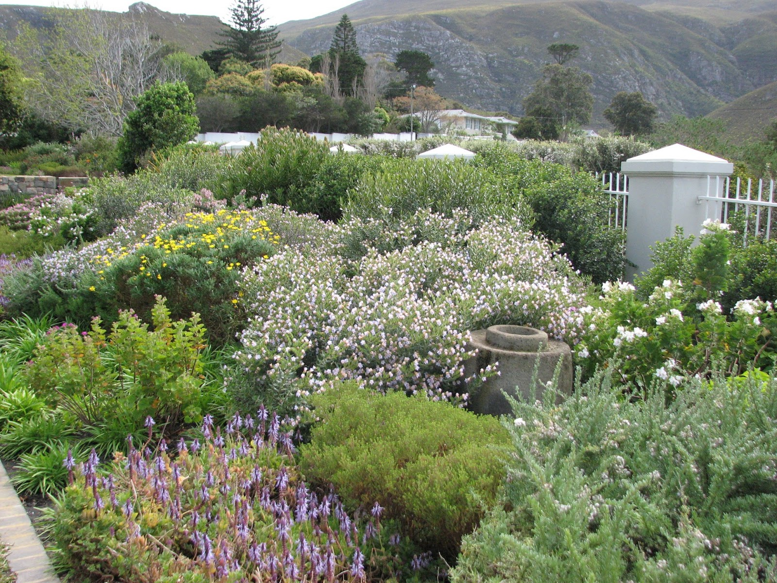 1000 images about fynbos protea gardens on pinterest for Garden designs in south africa