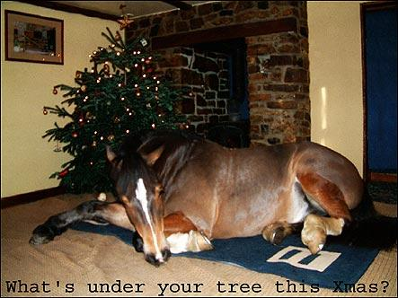 i know its hard to believe but every now and again i do occasionally want the odd thing for christmas that doesnt involve horses in the slightest