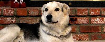 Don Sullivan's The Perfect Dog