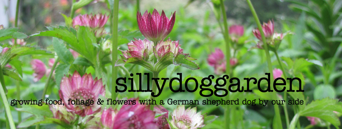 sillydoggarden
