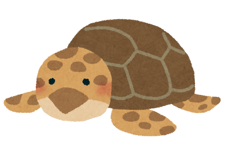 アオウミガメの画像 p1_37