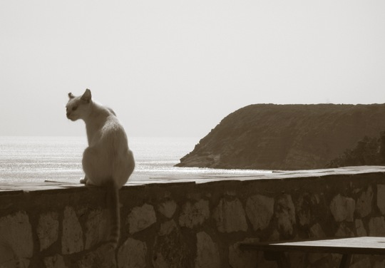 Burgau Portugal cat