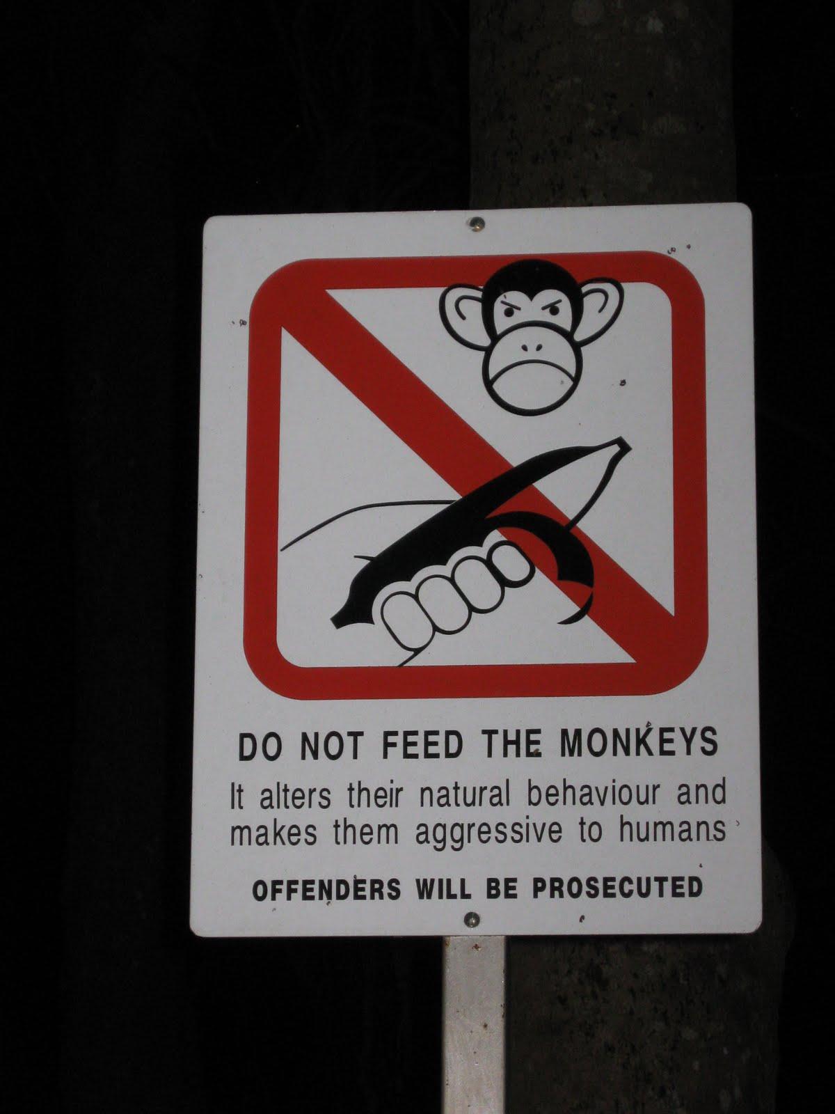 http://1.bp.blogspot.com/-P0IlE7i81Xg/TgnErYCSERI/AAAAAAAAAI8/kMaaiTaV28Y/s1600/Funny+Signs+-+don%2527t+feed+monkeys.JPG