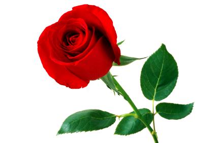 Be do kispo dia de s o valentim 14 de fevereiro - Saint valentin fleurs ...