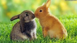 http://www.wallpaperslibrary.com/high-definition/3166-high-definition-easter-bunnies-wallpapers.html