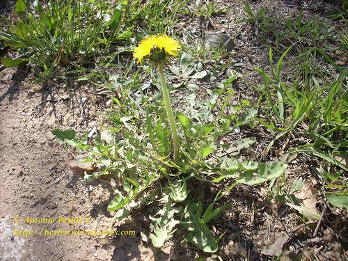 Hierbas medicinales plantas medicinales d e for Mezclas de plantas medicinales