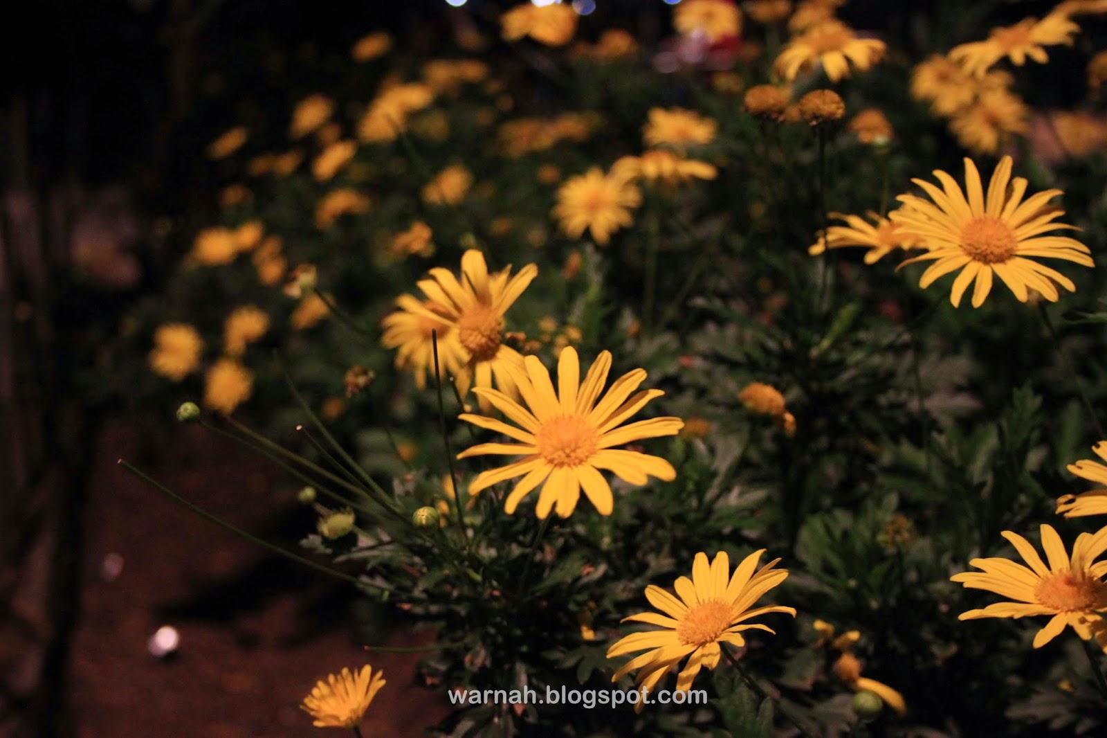 flowers baguio night