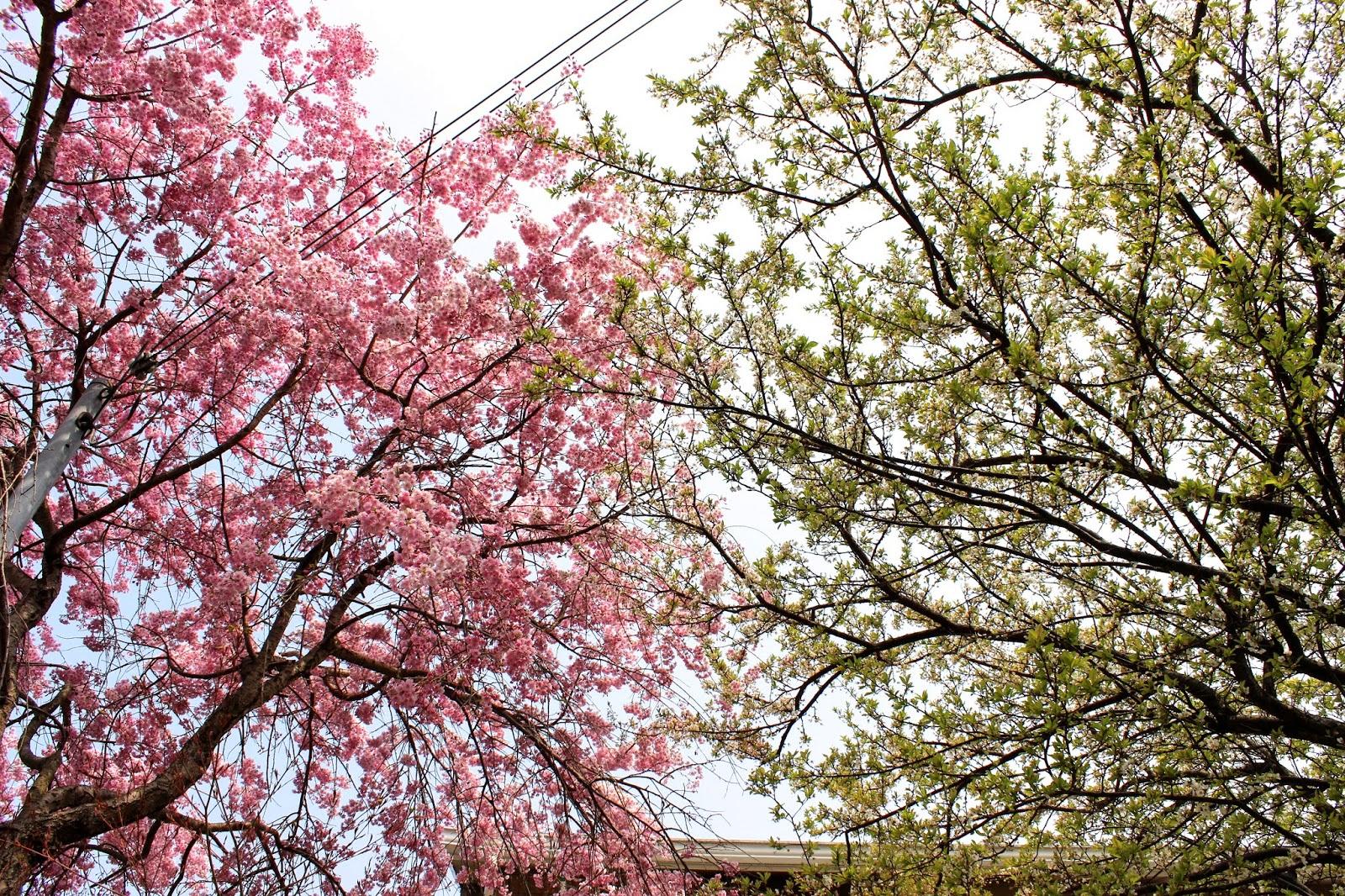 Spring in Japan 2014 | Sakura