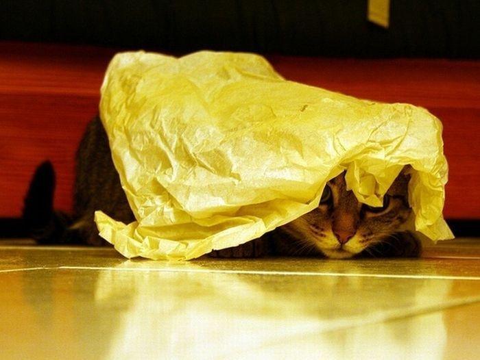 Кот прячется под листом желтой бумаги