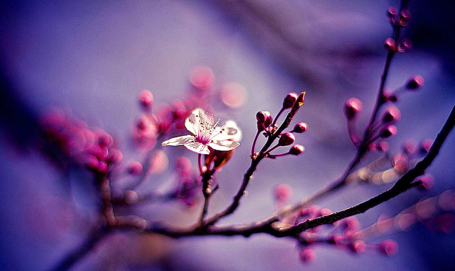 Flowers Desktop Wallpaper Spring Widescreen Pictures Www