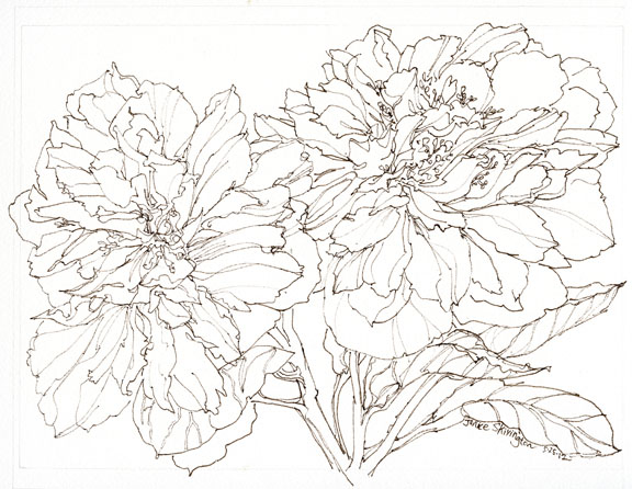 Line Drawing With Watercolor : Janice skivington may