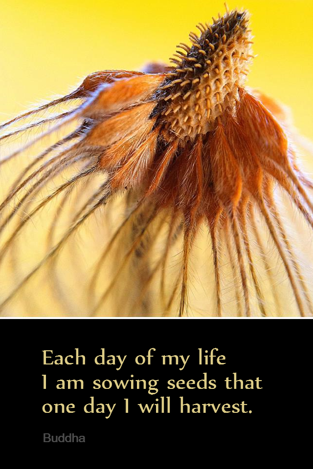 visual quote - image quotation for Law of Attraction - Each day of my life I am sowing seeds that one day I will harvest. - Buddha
