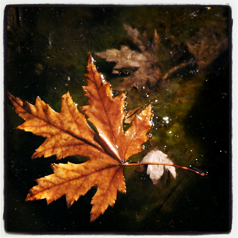Leaf on frozen fish pond in back yard instagram version for Does frozen fish go bad
