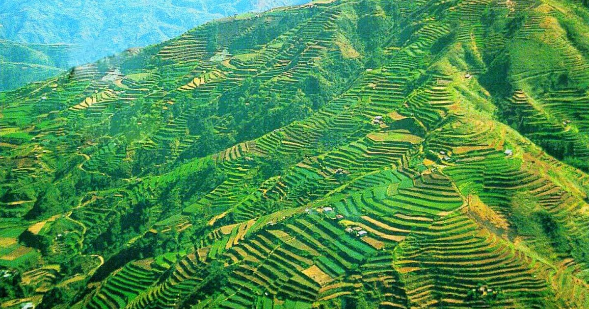 set in the majestic rice terraces Tulgao rice terraces news articles about tulgao rice terraces from the sungang view point in tinglayan, kalinga, the dananao and tulgao rice terraces can be viewed.