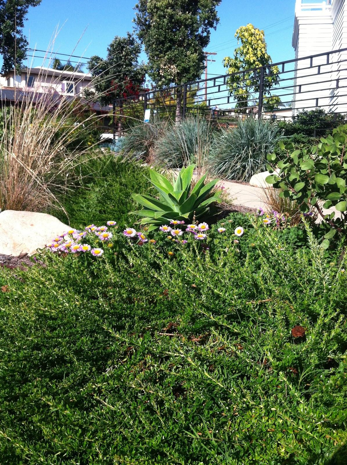 California Native Plants San Diego Style Oceanside Ocean Friendly Garden