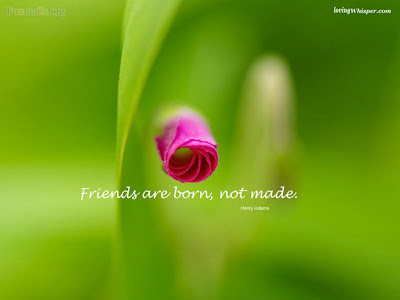FRIENDS ARE BORN, NOT MADE..