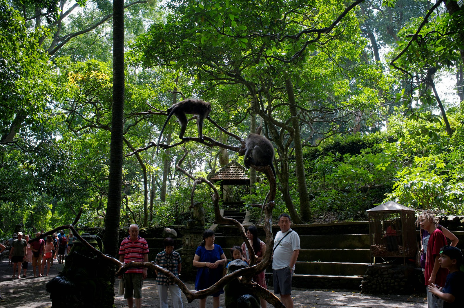 Bali Attractions: Ubud Monkey Forest