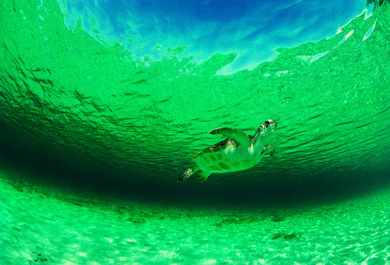 「GREEN SEA」の画像検索結果