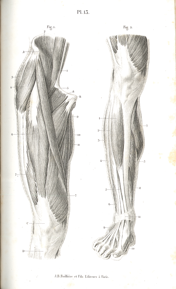 Research of Artistic Anatomy: 7月 2015