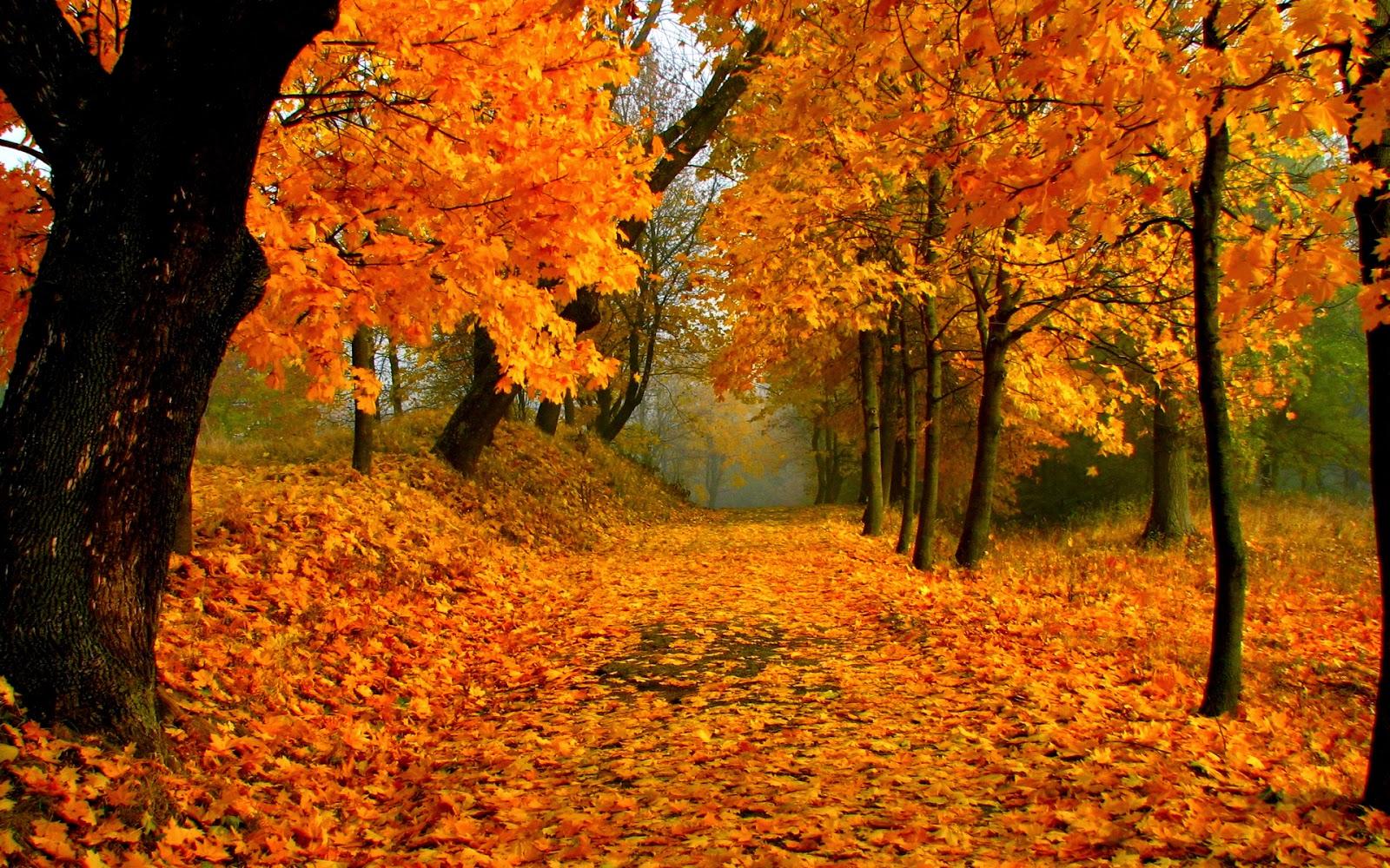 Viaggi per vedere il Foliage