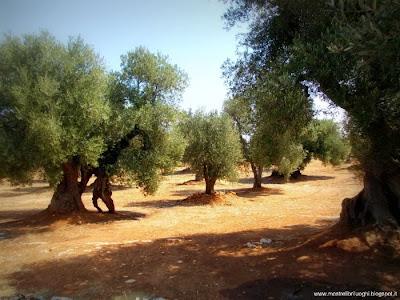 Mostrelibriluoghi del barocco e degli ulivi lecce brindisi for Grandi capanne di tronchi