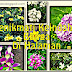 Ketenangan Menikmati Keindahan Bunga Di Halaman