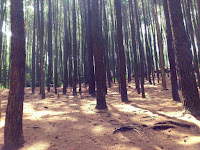 Istimewa Suasana di Hutan Pinus Imogiri