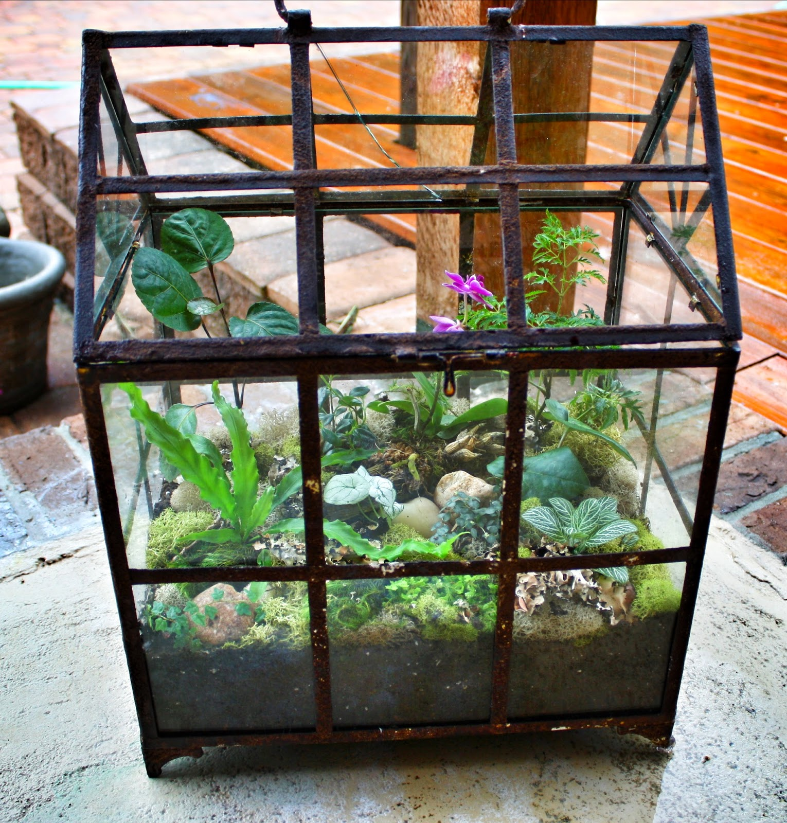 Sew Grown Plant Terrarium With Tropical Exotics